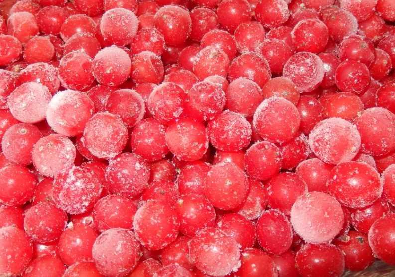 В зимнее время организм часто страдает от нехватки витаминов. В результате иммунитет снижается, присоединяются вирусные и простудные заболевания. Чтобы обезопасить себя и своих близких, опытные хозяйки заготавливают ягоды на зиму. Одной из самых целебных ягод считается калина. Но, перед приготовлением заготовок нужно знать, можно ли замораживать калину в морозилке и какие способы лучше применить. Можно ли замораживать калину в морозилке Калина полезная и вкусная ягода. В ее составе содержится большое количество витаминов и микроэлементов, которые справляются со многими недугами. Зная, как заморозить ягоду калину в морозильной камере, можно пользоваться ею продолжительное время. Так как правильно замороженный продукт может храниться около года. Температурный режим Чтобы замороженная ягода сохранила вкус и полезные свойства, важно соблюдать температурный режим. Выделяют три основных диапазона: • от 0 до -8°C – при такой температуре минимально снижается польза калины. Но при таком температурном режиме продукт хранится не более 3 месяцев; • от -8 до -18° C – средний температурный режим. Замороженная калина сохраняет вкус и полезные свойства 6 месяцев; • от -18 и более – глубокая заморозка. Заготовку можно использовать в течение 1 года. Часто хозяйки приобретают в дополнение к холодильнику бытовые морозильные камеры, которые снабжены функцией быстрой, глубокой заморозки. Перед использованием камеры важно ознакомиться с инструкцией и поместить калину в тот отсек, где будет держаться оптимально-допустимая температура. Дополнительные правила заморозки Чтобы замороженная калина сохранила лечебные свойства, нужно соблюдать несложные правила: 1. Калину собирают в сухой, морозный день. 2. С куста ягоды срывают вместе с кистями. 3. Дома калину отделяют от веток, убирая мусор и испорченные ягоды. 4. Подготовленную ягоду помещают в глубокую миску, заливают теплой водой н 10-15 минут. 5. Калину откидывают на дуршлаг до полного устранения влаги. 6. Ягоду раскладывают в один слой на 
